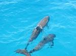 delphinschwimmen.ch