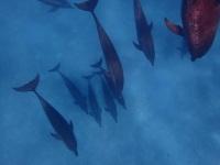 Delfinschwimmen.ch